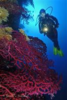 Croatia Diving: Diver on wall with Reg Gorgonian